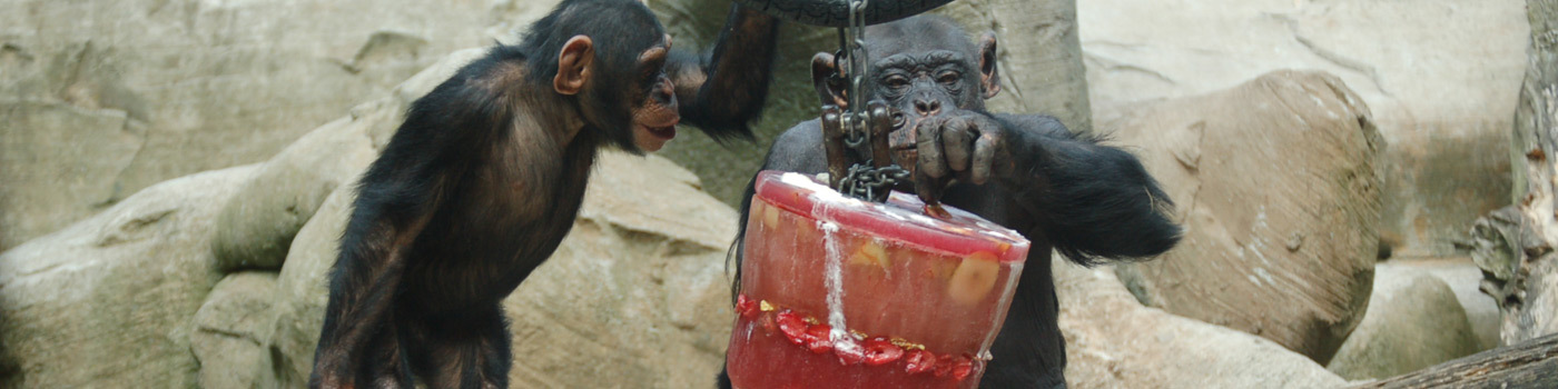 Monkey playing with a bucket.