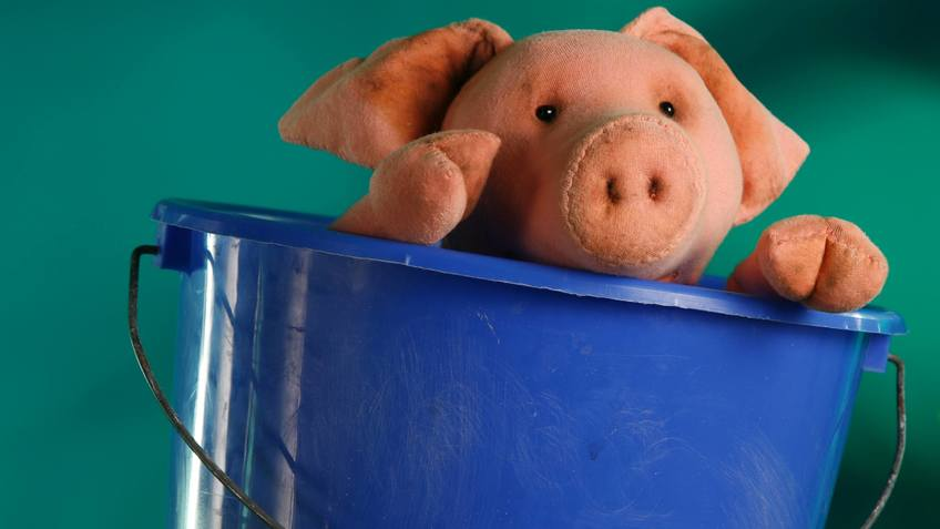 A piglets looks out of a bucket.