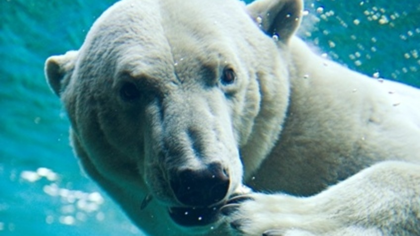 Zoo At The Sea With The North Sea Aquarium