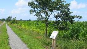 A bicycle trail leads past a field.