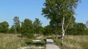 A boardwalk leads through a marsh area.